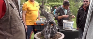 2014.05.31 - Hosszúhetényi Bonsai Workshop