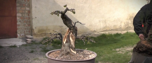 2015.03.28 Hosszúhetényi Bonsai Workshop VI. rész