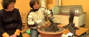 2015.03.28 Hosszúhetényi Bonsai Workshop III. rész
