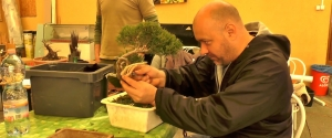 2015.03.28 Hosszúhetényi Bonsai Workshop IV. rész