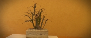 2015.03.28 Hosszúhetényi Bonsai Workshop I. rész